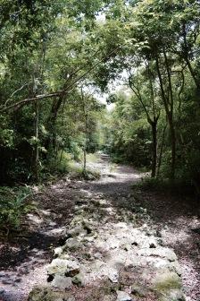 Jungle de San Gervasio - Cozumel