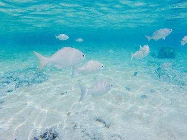 Banc de poissons - Cozumel