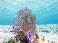 Corail - Cozumel