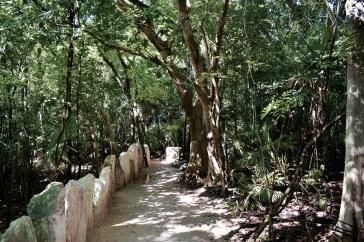 Végétation tropicale - Xcaret