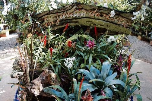 Serre aux orchidées - Xcaret
