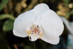 Orchidée - Xcaret