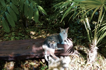 Chat sauvage - Xcaret