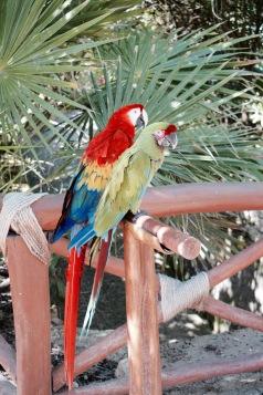 Perroquets - Xcaret