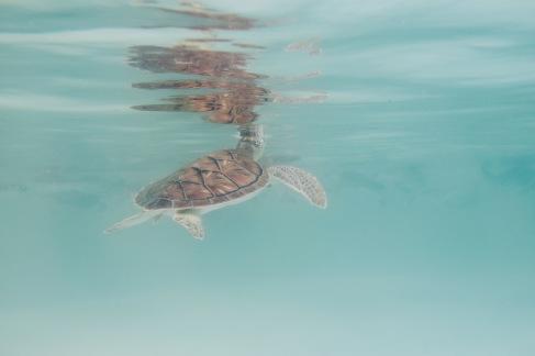 Bébé tortue de mer - Xcaret