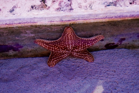 Étoile de mer - Xcaret