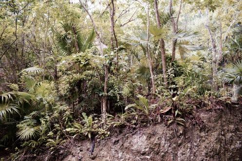 Végétation - Xcaret