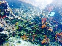 Banc de poissons et coraux - Cozumel