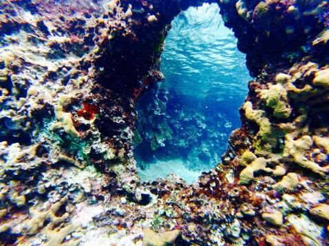 Récif de coraux - Cozumel