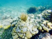 Récif de coraux - Puerto Morelos