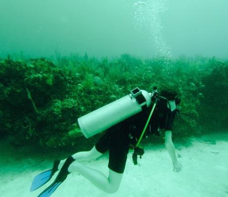 Plongé sous marine - Mahahual