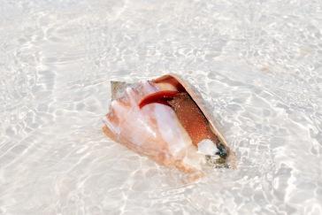 Crustacé - Holbox