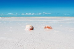 Coquillages - Holbox
