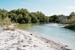 Mangrove - Holbox