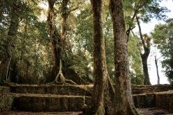 Temples - Palenque