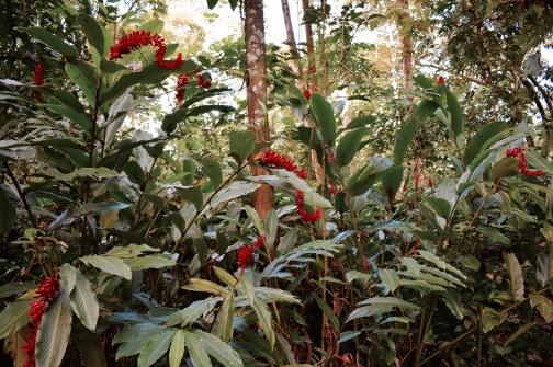 El Panchan - Palenque