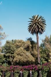 Parque Mexico - Condesa