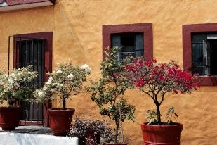 Maison coloré - Cuernavaca