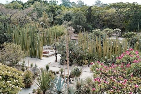Jardin Etnobotanico - Oaxaca
