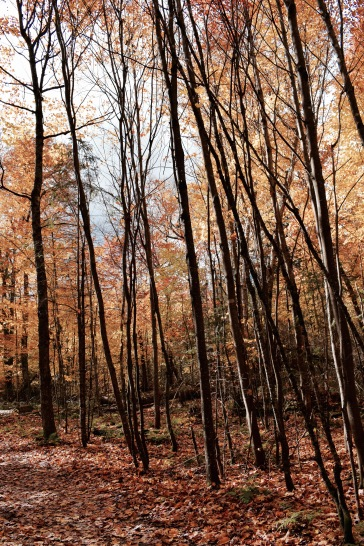 Fôret - Parc National du Mont Tremblant