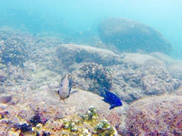 Snorkelling - Puerto Escondido