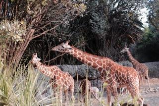 Zoo - Chapultepec