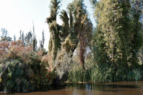 Xochimilco - Mexico