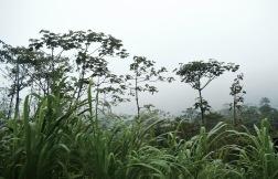 Jungle - La Fortuna