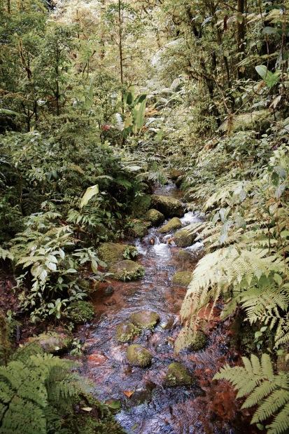 Réserve Bosque Nebuso Santa Elena - Région de Monteverde