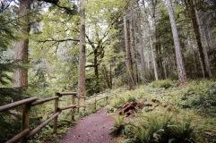 Forêt - Grolland Tod Provincial Park